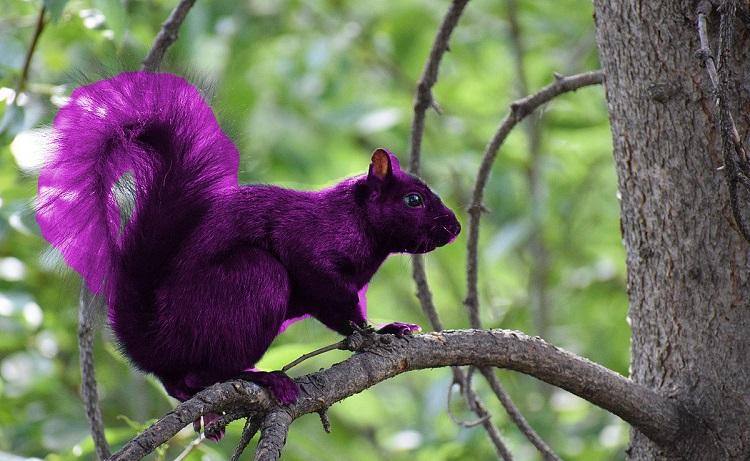 purple-sauirrel-kien-nghiep-group